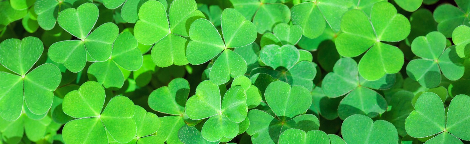 photo of green leaf clovers banner image